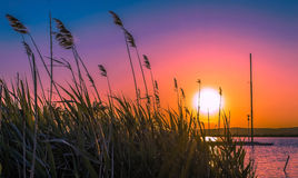 Sunset on the lake. Sunset through the reeds on the lake Royalty Free Stock Image