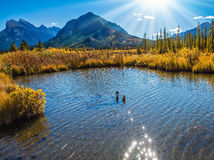 The sunset on lake. The Rocky Mountains, Canada. Magnificent sunset on lakes Vermilion in mountains National park Banff. Concept of ecotourism Stock Photography