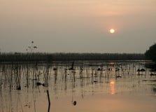 Sunset on the lake. Royalty Free Stock Image