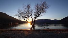 Sunset on a lake. Serene sunset on a lake in the mountains with tree in the water and mallard ducks swimming by stock video