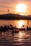 Sunset on lake with silhouette of Birds and Mountains Stock Photo