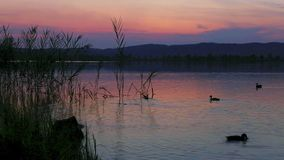 Sunset at a lake stock video footage
