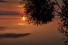 Sunset at the lake with a view through the bush silhouette Royalty Free Stock Images