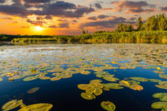 Sunset on the lake with water lilies Stock Photography