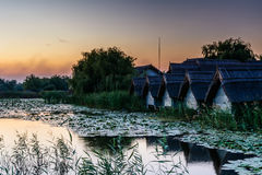 Sunset on the lake with water lilies and reeds with rustic house Royalty Free Stock Image