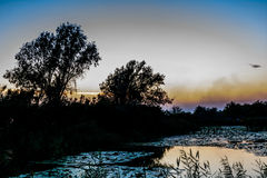 Sunset on the lake with water lilies, reeds and with trees in th Stock Photos