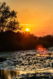 Sunset on the lake with water lilies  and with trees in the background Stock Photo