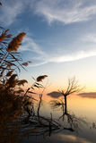 Sunset at the lake. Sunset on a lake, with windswept clouds, soft and warm colors, and some trees and plants reflecting on water royalty free stock photo