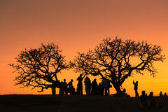 Sunset at lalbagh garden2. Sunset in Bangalore  trees being the silhouttes against a great sun Stock Images