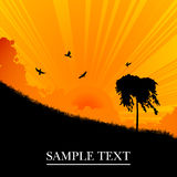 Sunset landscape. With tree, background illustration Stock Photos