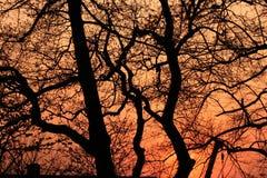 Sunset landscape stock photography