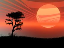 Sunset landscape. Tree silhouette against a very hot sunset Stock Photos