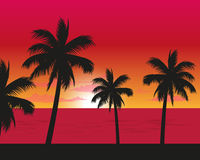 Sunset Landscape Of the beach Side. Vector illustration of the beach with coconut palm trees at the sunset time Stock Image