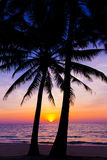 Sunset landscape. beach sunset.  palm trees silhouette on sunset Stock Photos