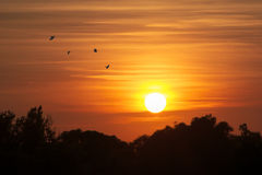 Sunset Landscape with Birds. Sunset landscape with some birds on the sky Royalty Free Stock Images