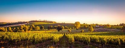 Free Sunset Landscape Bordeaux Wineyard France Royalty Free Stock Image - 112654606