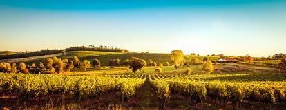 Sunset landscape bordeaux wineyard france