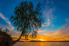 Sunset. Landscape with Clouds and Tree stock images