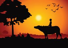 Sunset landscape and country life with a boy ride on buffalo back around with tree.countryside of east lifestyle. Illustration Stock Photo