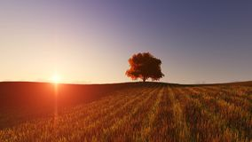 Sunset one tree and wind. Sunset landscape one tree and wind stock footage