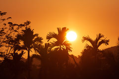Sunset landscape with palms Royalty Free Stock Photos