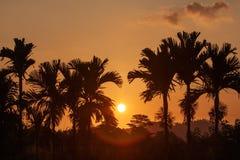 Sunset landscape with palms Stock Photography