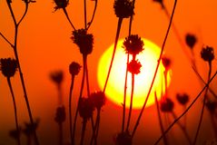 Sunset landscape with sun over dry grass Royalty Free Stock Photography