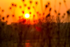 Sunset landscape with sun over dry grass Royalty Free Stock Photo