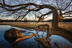 Sunset landscape tree mood Elbe River waters Elbe River royalty free stock photography