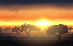Sunset landscape with tree silhouette Royalty Free Stock Photo