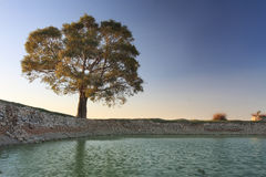 A sunset landscape with a tree and water Royalty Free Stock Photography