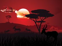 Sunset Landscape With Antelopes Stock Photo