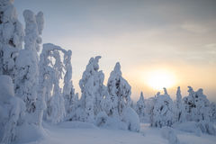 Sunset at lapland Royalty Free Stock Photography