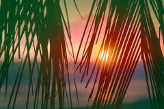 Sunset through leaves of palm trees on Indian ocean. Promise of heavenly rest. Sunset through leaves of palm trees on Indian ocean, Tropical journey. Well Royalty Free Stock Photo