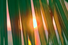 Sunset through leaves of palm trees on Indian ocean. Promise of heavenly rest. Sunset through leaves of palm trees on Indian ocean, Tropical journey. Well Royalty Free Stock Photography