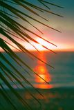 Sunset through leaves of palm trees on Indian ocean. Promise of heavenly rest. Sunset through leaves of palm trees on Indian ocean, Tropical journey. Well Stock Photo