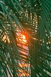 Sunset through leaves of palm trees on Indian ocean. Promise of heavenly rest. Sunset through leaves of palm trees on Indian ocean, Tropical journey. Well Royalty Free Stock Image