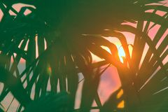Sunset through leaves of palm trees on Indian ocean. Promise of heavenly rest. Sunset through leaves of palm trees on Indian ocean, Tropical journey. Well Royalty Free Stock Images