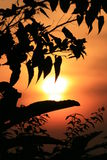 Sunset through leaves, Thailand. Red sunset through tropical leaves, Thailand Stock Image
