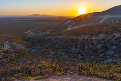 Winery Fields in Ica at Sunset, Peru. Sunset with lens flare in the vineyards of Ica for wine and Pisco production located in the desert by the coast of Peru royalty free stock photos