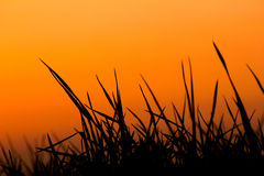 Sunset light. A beautiful nature sunset silhouette Royalty Free Stock Photography