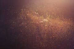 Sunset light on a field of wild flowers Stock Photo