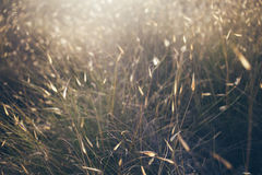 Sunset light on the fild. De-focused image of dry herbs you can use it for your design concepts Stock Images