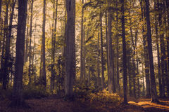 Sunset light in a forest during autumn Stock Photo