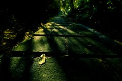 Sunset light illuminate a fallen leaf. A fallen leaf lays on a foot path. The sunset light illuminate the leaf. Light and shadows made this an dramatic image stock image