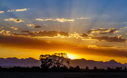 Sunset Light Rays and Silhouetted Tree Stock Image
