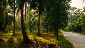 Sunset Light shine through palm trees in tropical jungle with road. Thailand Royalty Free Stock Photos