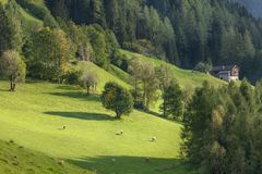 Sunset lights over a mountain pasture at fall stock photo