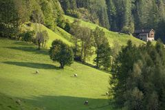 Sunset lights over a mountain pasture at fall royalty free stock photo