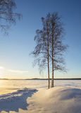 Sunset lights and shadows in winter landscape with alone tree. In Sweden stock images
